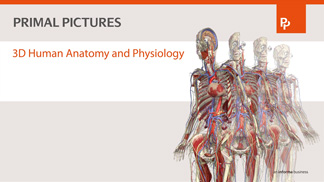Primal's 3D Human Anatomy and Physiology movie